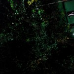 google-nexus-5-camera-sample-low-light-5